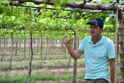 Culturas como a de uva no Vale do São Francisco são atendidas pela Pomartec