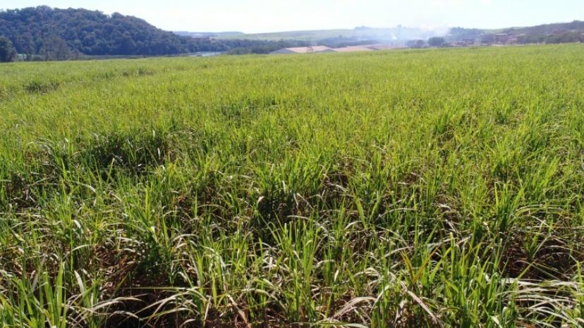 Imagem RGB de uma plantação de Cana de Açúcar