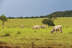 Embrapa lança recomendações para candidatos sobre os desafios do Agro