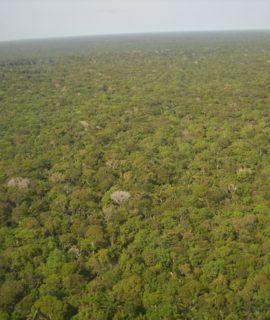 Drones da DJI estão sendo usados para mapeamento da Amazônia