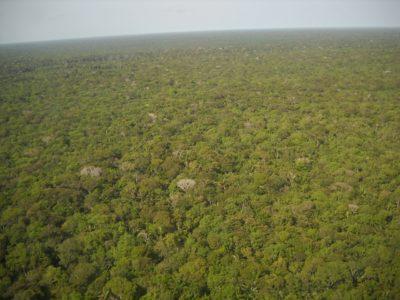 amazonia vista de cima com drones