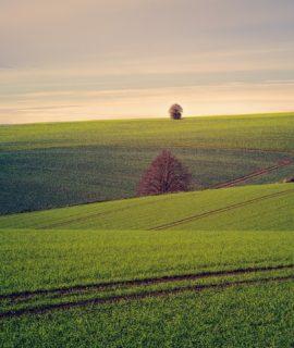 Embrapa lança plataforma para impulsionar agricultura digital