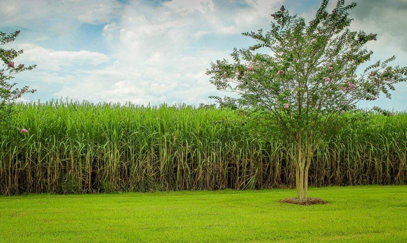 Gamaya lança plataforma para automação de decisões no cultivo de cana