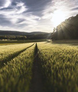Governo Federal cria Comissão Brasileira de Agricultura de Precisão e Digital