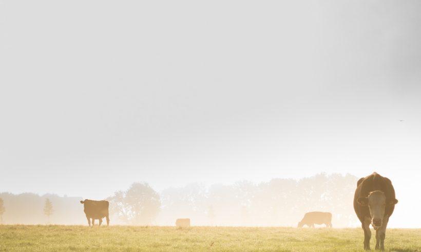 Pesquisa coordenada pela Embrapa usa drones na contagem de gado