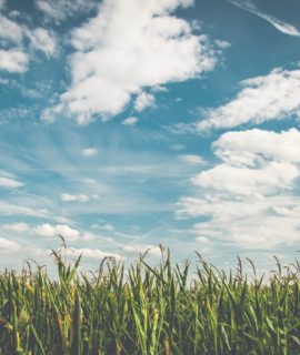 Empresa mostra resultados do controle biológico de pragas com Drones