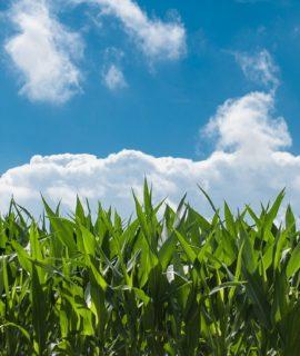 Brasil possui mais de 300 startups com soluções para o agro