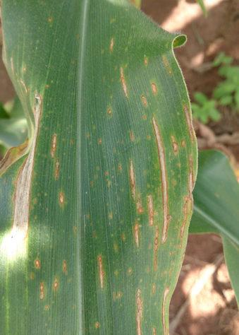 doencas em plantas