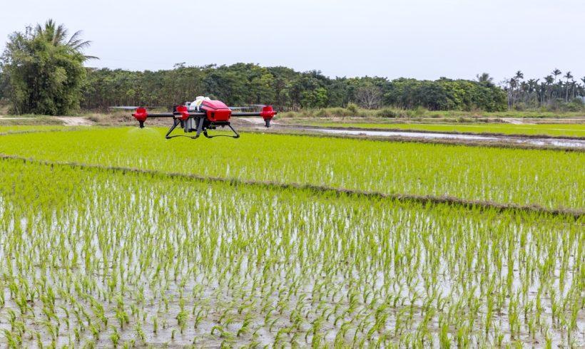 IBGE divulga Cadastro de Estabelecimentos do Censo Agropecuário