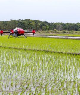 Sucesso da agricultura brasileira atrai delegação dos Emirados Árabes à Embrapa