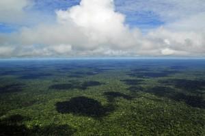 Vídeo destaca tecnologias de ponta a serviço das florestas brasileiras