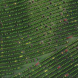 Replay na íntegra: Mapeamento e Processamento de Dados de Drones
