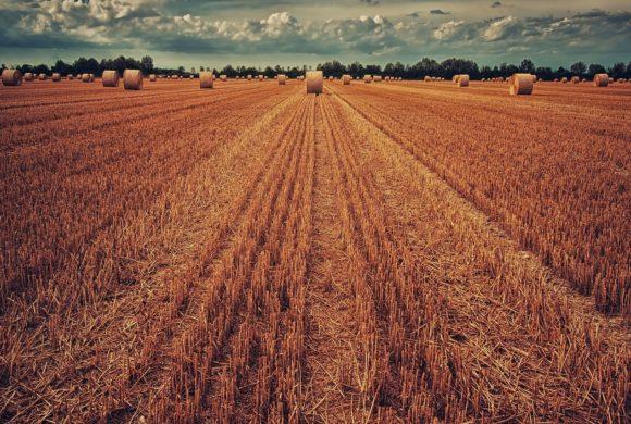 Governo edita Medida Provisória que estimula financiamento do Agronegócio