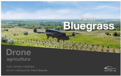 parrot blue grass
