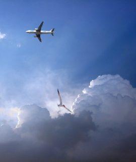 São Paulo recebe em setembro a 2ª edição do AeroFauna