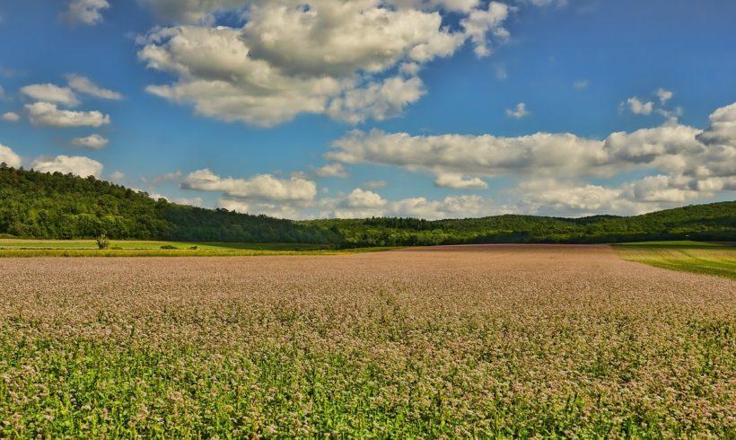 Lançamento: plataforma colaborativa para compartilhamento de informações agrícolas
