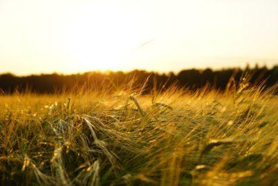 pos em agricultura e meio ambiente