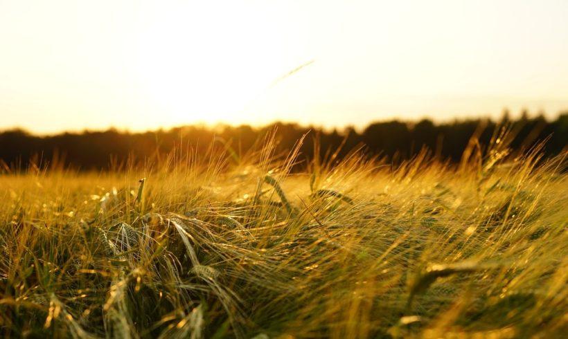 Pós em Agricultura e Ambiente da UFSCar abre processo seletivo