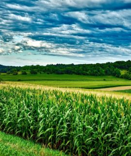 Artigo: Presidente da Embrapa avalia momento atual do Agro