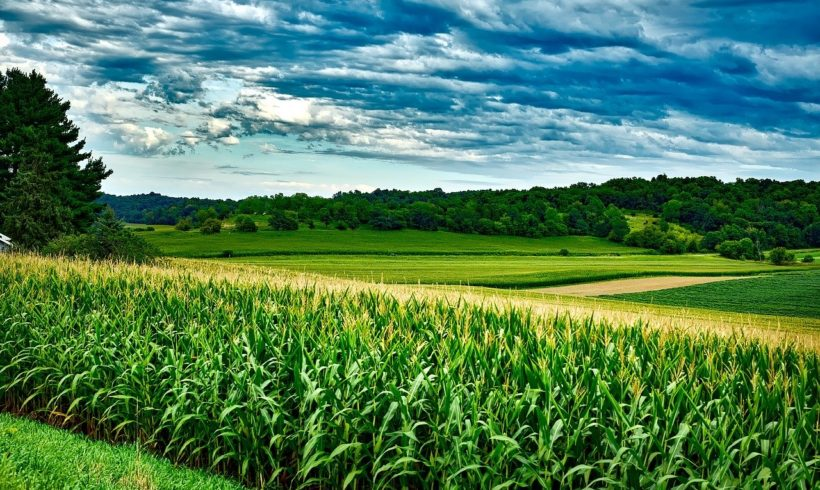 IBGE anuncia previsão de safra recorde de grãos para 2020